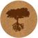 Oak tree - CorkWay